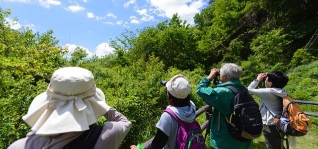 【2016/5/29(日)】予備知識不要!野鳥観察入門に最適 バードウォッチング+自然観察 ※残りわずか