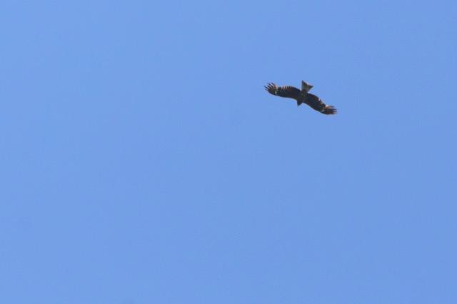 Bird2015 43
