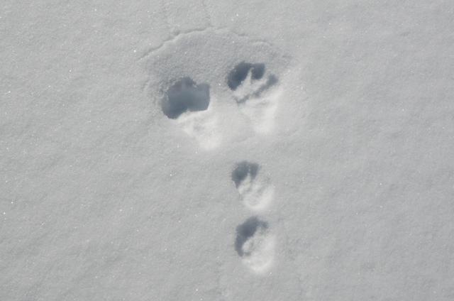 snowdorobu_01