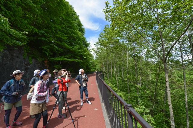 【5/28(日)】野鳥観察入門に最適!バードウォッチング+自然観察