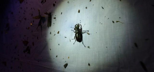 【2016/8/20(土)】発見いっぱい栗山ナイト!30種1,000匹を超える昆虫たち。ライトトラップで昆虫観察