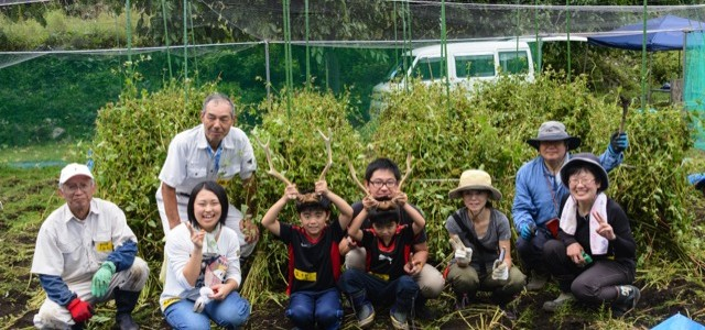 【2015⑮ 栗山そば刈取り体験レポ】子供も夢中になる秋の収穫。地元スタッフとの楽しい作業が好評