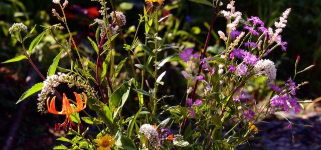 【8/5(日)】花の宝庫で盆花を愛でる 土呂部 盛夏のフラワーツアー